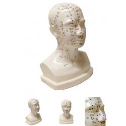 Модель головы