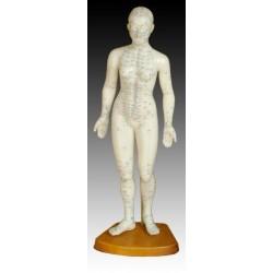 Модель тела женщины 48см