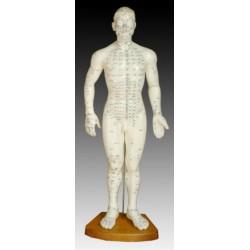 Модель тела мужчины 50см