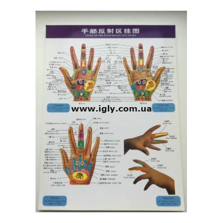 Плакат руки