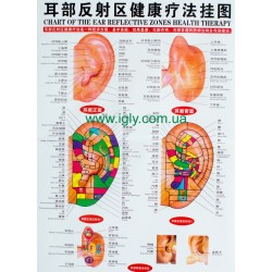 Кольоровий плакат вуха