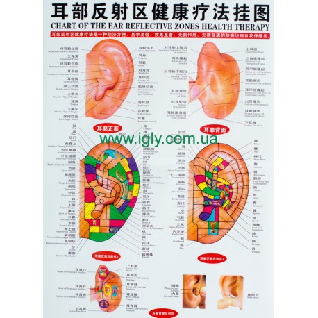 Цветной плакат уха